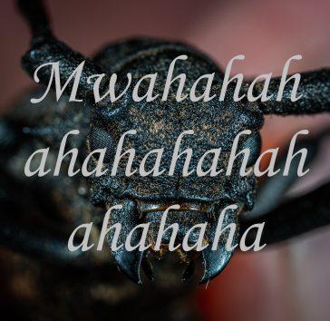 animal-antenna-beetle-1101214