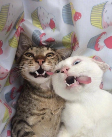 cats.png